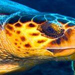 Belize-Barrier-Reef-Scuba