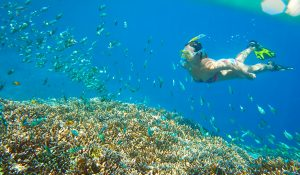 diving-and-snorkeling3
