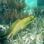 Snorkel the Mexico Rocks!