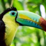 Belize Named One Of the Top Birding Destinations in the World!