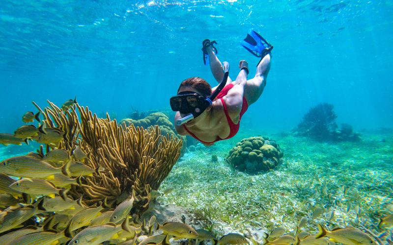 Reef - Captain Morgan's Retreat. Belize