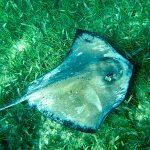 World Oceans Day Belize